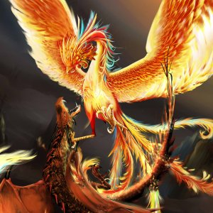 dragon contre phoenix